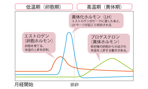 基礎体温とホルモンの関係